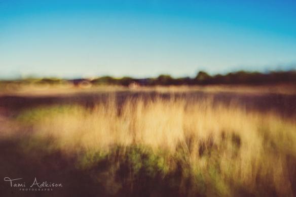 field of grass oof