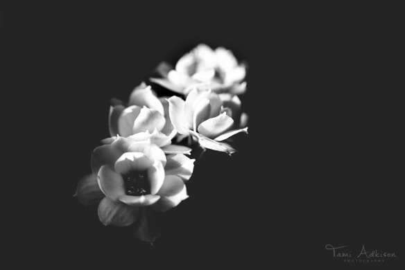 flowers Sept 2013 bw2fix