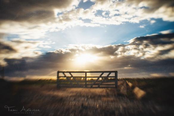 gate at sunrise