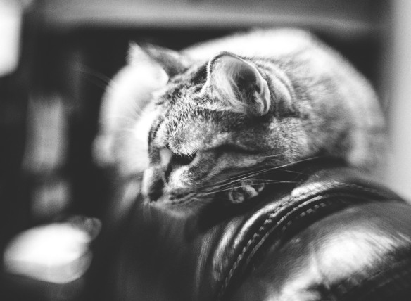 kitty-roxy