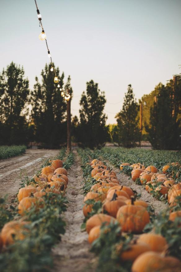 schnepf pumpkin patch 1