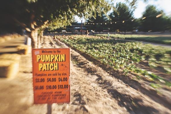 Schnepf pumpkin patch 2
